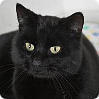 Adopt A Pet :: Tobias - Bristol, CT