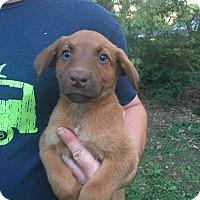 Adopt A Pet :: Felix~adopted! - Glastonbury, CT