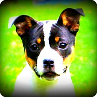 Adopt A Pet :: Lola - Glastonbury, CT