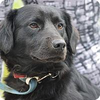 Adopt A Pet :: BEAR - Rockwood, TN
