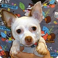 Adopt A Pet :: Pinki - Wildomar, CA