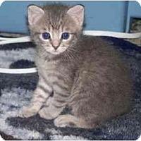 Adopt A Pet :: Heidi - Secaucus, NJ