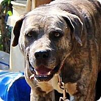 Adopt A Pet :: Buster - Nolensville, TN