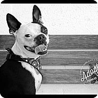 Adopt A Pet :: Mario - Albany, NY