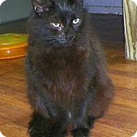 Adopt A Pet :: Vincent - Dover, OH