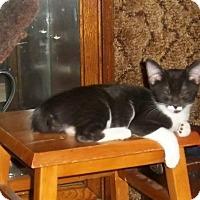 Adopt A Pet :: Moo Cow Boy - Seminole, FL