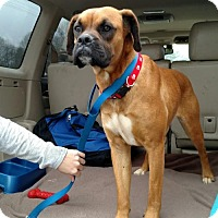 Adopt A Pet :: Sadie - Jacksonville, AL