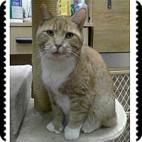 Adopt A Pet :: Sniffles - Trevose, PA
