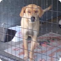 Adopt A Pet :: Chole - Jamestown, TN