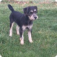 Adopt A Pet :: Susi - New Oxford, PA