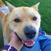 Adopt A Pet :: DaeYong - Los Angeles, CA