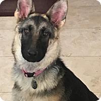 Adopt A Pet :: Luna Bella - Modesto, CA