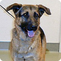 German Shepherd Dog Mix Dog for adoption in Wildomar, California - Waylon