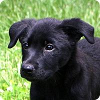 Adopt A Pet :: Sassy - Glastonbury, CT