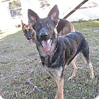 Adopt A Pet :: Mea - Green Cove Springs, FL