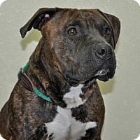 Adopt A Pet :: Deebo - Port Washington, NY