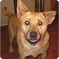 Adopt A Pet :: Cisco - Afton, TN