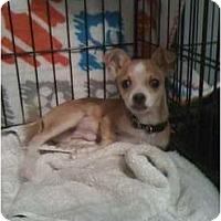 Adopt A Pet :: Stewie - Phoenix, AZ