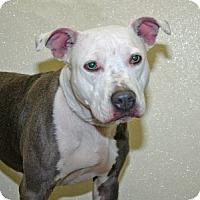 Adopt A Pet :: Jolly - Port Washington, NY