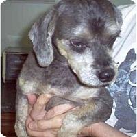 Adopt A Pet :: Neville - Albany, NY