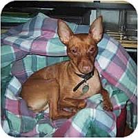 Adopt A Pet :: Stewie - Springvale, ME