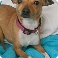 Adopt A Pet :: Giselle - Brooksville, FL