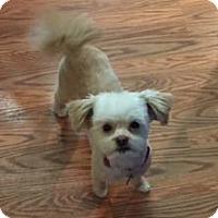 Adopt A Pet :: Wookie - Meridian, ID