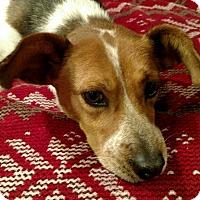 Adopt A Pet :: Maci - Knoxville, TN