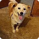 Adopt A Pet :: Snowy - Adoption Pending