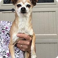 Adopt A Pet :: Tinker - Temecula, CA