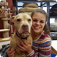 Adopt A Pet :: Meg - Brunswick, OH
