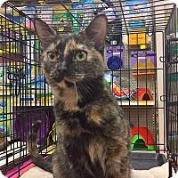 Adopt A Pet :: PEPPER - Raleigh, NC