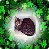 Adopt A Pet :: Haley - Americus, GA