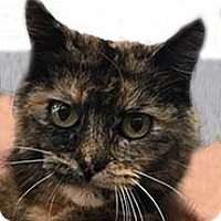 Adopt A Pet :: Lulu - Tiburon, CA