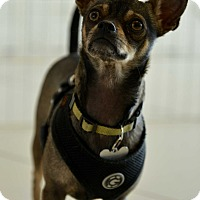 Adopt A Pet :: Otis - Culver City, CA