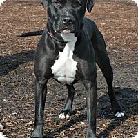 Adopt A Pet :: Angus - Yreka, CA