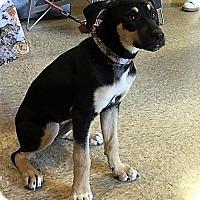 Adopt A Pet :: Ruby - Madisonville, LA