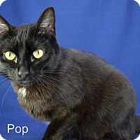 Adopt A Pet :: Pop - Carencro, LA