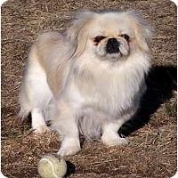 Adopt A Pet :: Sara - San Angelo, TX
