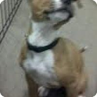 Adopt A Pet :: Captain Hook - Phoenix, AZ