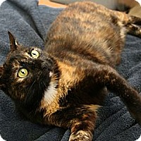 Adopt A Pet :: Natasha - Secaucus, NJ
