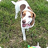 Adopt A Pet :: Charlotte - Hagerstown, MD