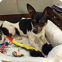 Adopt A Pet :: Burberry - Wappingers, NY