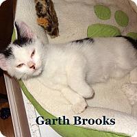 Adopt A Pet :: Garth Brooks - Bentonville, AR