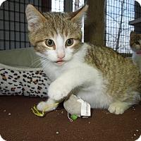 Adopt A Pet :: Frosty - Medina, OH