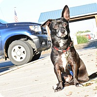 Adopt A Pet :: Tommy - Meridian, ID