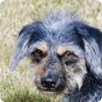 Adopt A Pet :: Benji - Portola, CA