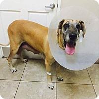 Adopt A Pet :: Lizzie - Newport Beach, CA