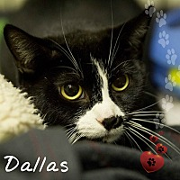 Adopt A Pet :: Dallas - Germantown, OH