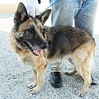 Adopt A Pet :: Ginna - San Diego, CA